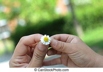 garçon, sien, donner, fleur, maman, pâquerette, litlle
