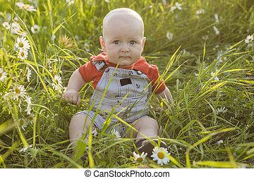 garçon, sourires, charmer, champ, été, petit, enfantqui commence à marcher, pâquerettes
