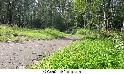 garçon, vélo, été, forêt, promenades, chemin