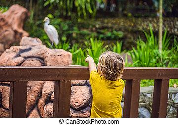 garçon, week-end, park., amusement, gosses, oiseaux