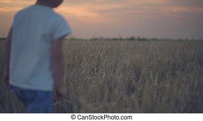 garçons, marche, champ blé