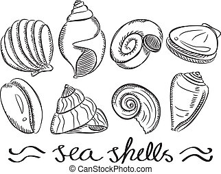 garabato, conjunto, conchas de mar