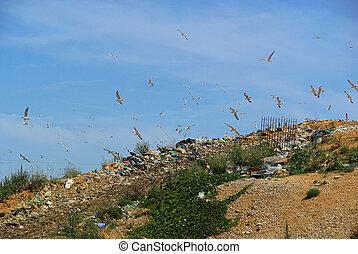 garbage dump 07