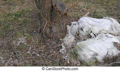 Garbage dump near trees. Environmental pollution.