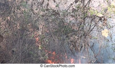 Garbage dumping and burning. - Garbage dumping and burning...