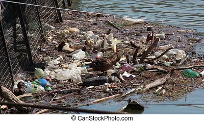 Garbage in the river
