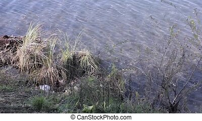 Garbage on a shore of the lake, water pollution.