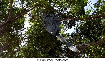 Garbage on the trees - broken old bag stuck on the tree...
