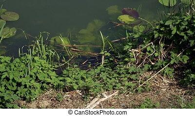 Garbage. Rubbish floating in the lake