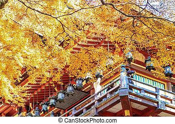 garde, ahorn, japanisches , bäume, rotes