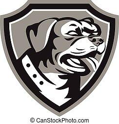 garde, noir, rottweiler, bouclier, chien, blanc