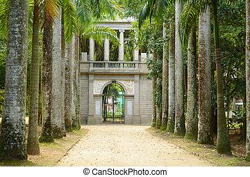 garden., árboles., real, palma, botánico, avenida