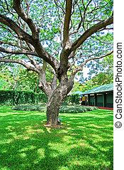 garden., 大きい, ブランチ, 木