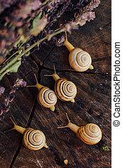 garden., ambulante, alrededor, caracol, árbol, amarillo, th, caracoles