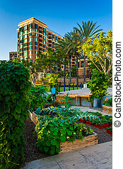 Garden and apartment building in San Diego, California.
