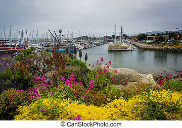 Garden and boats in the harbor, in Monterey, California.