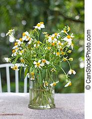 garden., asztal, óriási sajtkorongok