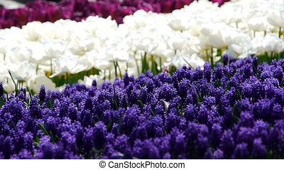 Garden beatiful flowers nature