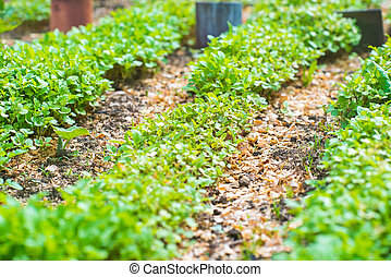 Garden Bed Closeup, Farming, Gardening, Agriculture, World...