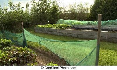 Garden Beds in Yard - Handheld, panning, medium wide shot of...