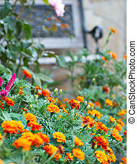 Garden bench surrounded by lush summer vegetation
