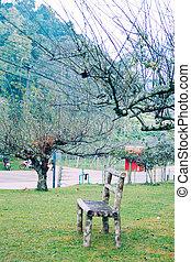 garden bench under the tree