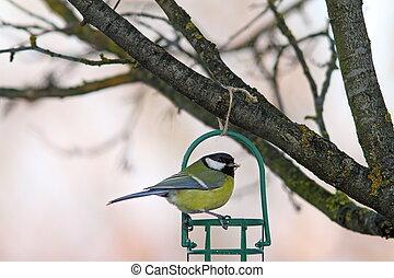 garden bird on fat feeder