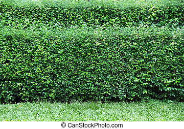 Garden bush background