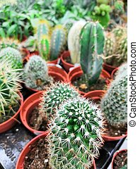 Garden center and wholesale supplier concept. Many different cacti in flower pots in flowers store on the shelves of trolley.