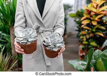 Garden center and wholesale supplier concept. Selective ...