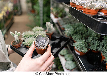 Garden center and wholesale supplier concept. Selective focus on succulents in pots in the hands of woman. Buying plants for home. Cheerful female holding out potted succulents to the camera.