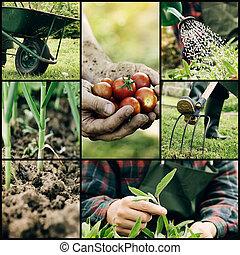 Garden collage - Garden. Collage of spring gardening work....
