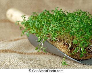 Garden cress on garden trowel