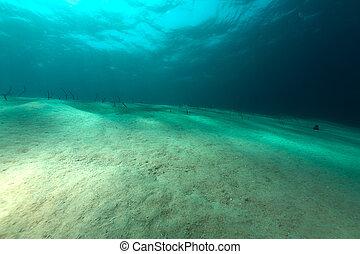 Garden eels in the Red sea.