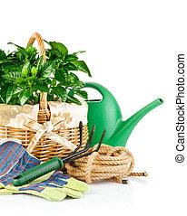 garden equipment with green plants