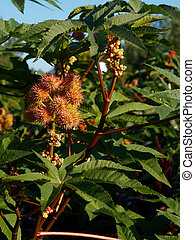 garden exotic plants against blue sky