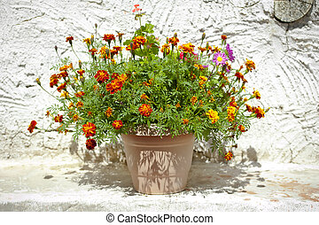 Garden flower pot with growing tagetes