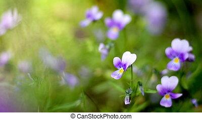 garden flowers close-up