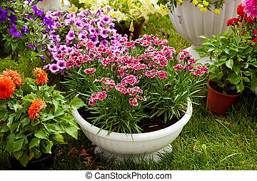 Garden flowers of different colors in pots