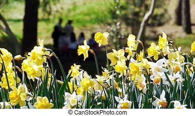 Garden flowers yellow nature