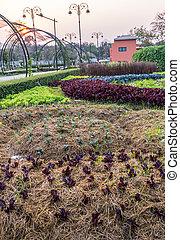 Garden for planting flowers plants