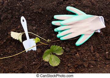 Garden gloves and scoop on fresh ground. Spring gardening, ...