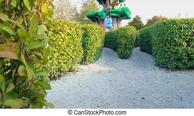 garden green maze of hedges. entertainment and walks in the Park. landscape design. evergreen shrubs.