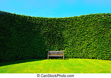 Garden hedges with a wooden bench