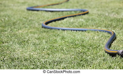 Garden Hose - Watering the lawn with a garden hose, dolly...