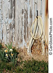 Garden Hose with Daffodils