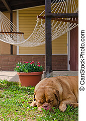 Garden house, hammock and sleeping dog