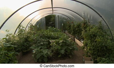 Garden in Small Greenhouse - Steady, medium wide shot of...