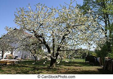 garden in spring - trees bloom in spring in fine weather