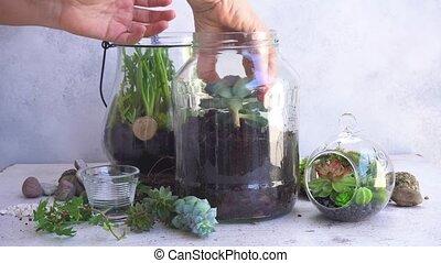garden inside mason jar - glass mason jar with plants...